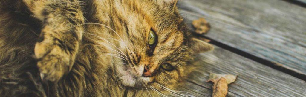 photo-cat-relaxing